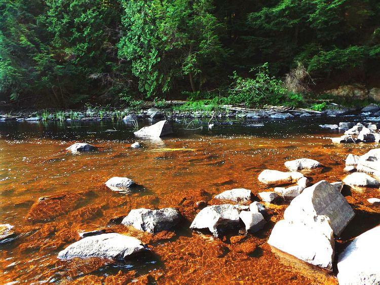 Algonquin Park Algonquinprovincialpark Nature Rocks Water River