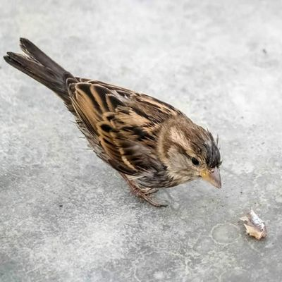 Bird Birds Uccello Uccello passerotto natura nature fauna pet animale animali pets
