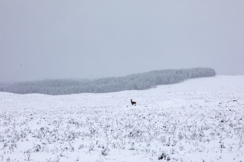 Animals In The Wild Deer Nature Scotland Tadaa Community Winter Landscape No People Outdoors Rannoch Moor Snow