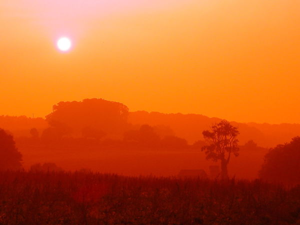 Beauty In Nature Clear Sky Landscape Misty Nature Orange Color Outdoors Scenics Sun Sunset Tranquil Scene Tranquility Tree