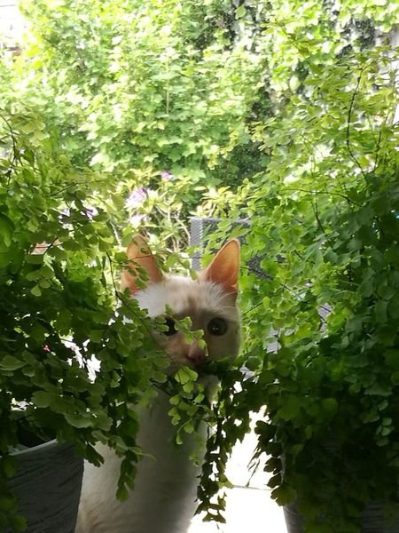 Pets Portrait Feline Flower Domestic Cat Tree Looking At Camera Green Color Plant