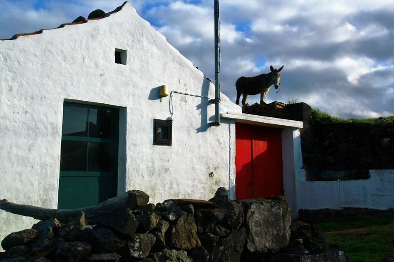 There´s A Donkey On My Roof! Architecture Barn Barnstalker Building Exterior Built Structure Cloud - Sky Daredevil Day Domestic Animals Donkey Donkeykong Donkeyonroof Flores Island Gate Low Angle View Mammal No People One Animal Outdoors Ponta Ruiva Red Doors Sky Surprise! Zoology