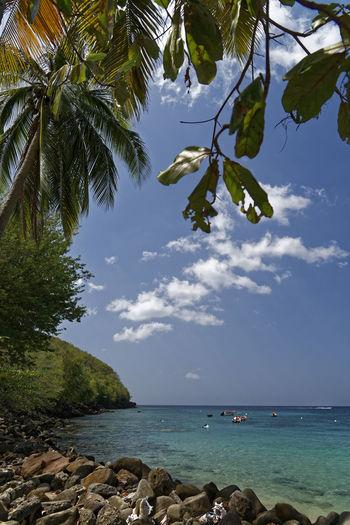 Anse Dufour, Martinique...what else ! Carribean Coconut Tree Island Lagoon Landscape Paradise Beach Sea Sky Tropical Climate