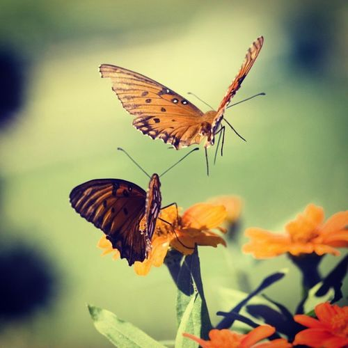 If u lead i will follow u. Merrygold Flowerstagram Butterflys Naturegraphy Summer Click4Follow Photomania Dailyupdate Instafavouritepic Follow4follow .