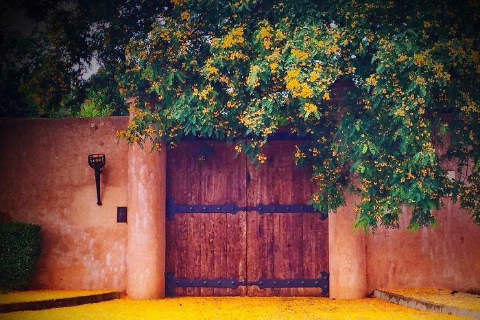 Gate Acacia Autumn Orange Wall Castle Yellow Floor Street
