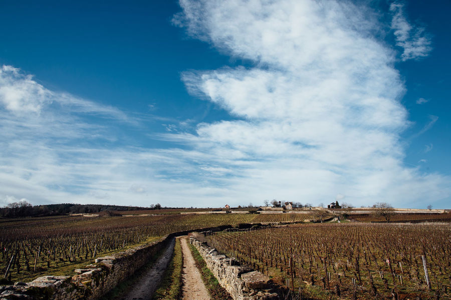 Agriculture Bourgogne Burgundy Cloud - Sky Day Landscape No People Outdoors Sky Vine Growing Vines Wall Wine Winter