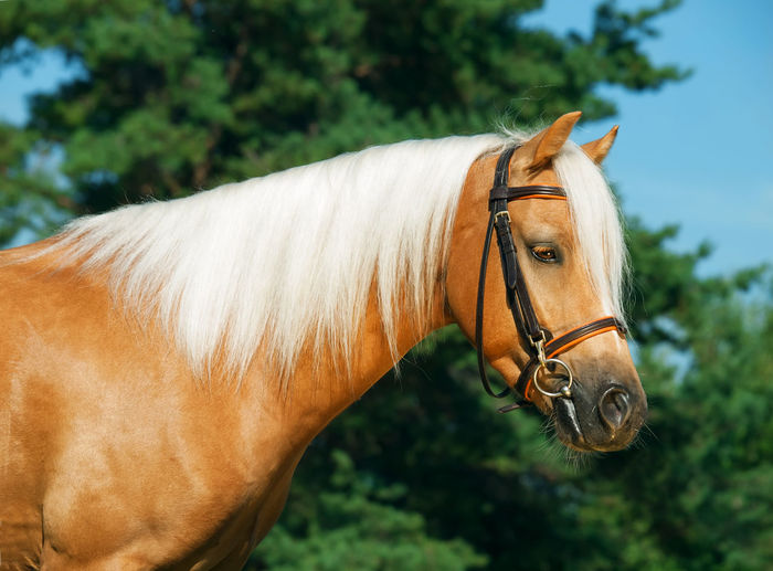 Close-up of horse standing against trees