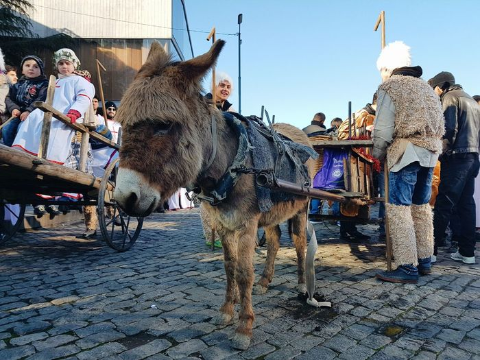 Alilo - Orthodox Christmas march in Georgia Tbilisi Streetphotography Donkey March Street Performer Animal Domestic Animals Animal Themes Outdoors Mammal People Sky Day Adventures In The City Focus On The Story The Street Photographer - 2018 EyeEm Awards