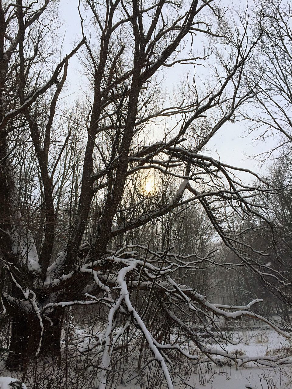 bare tree, tree, branch, winter, nature, no people, outdoors, snow, low angle view, forest, tranquility, beauty in nature, cold temperature, day, sky