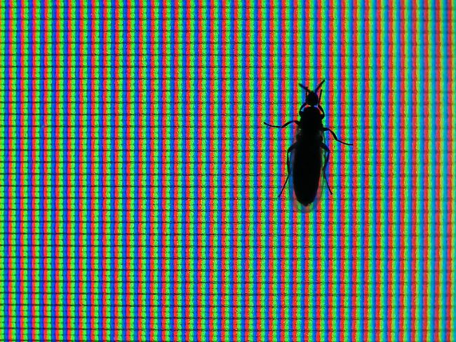 RGB insect Animal Themes Close-up Fly Fly Macro Gnat Gnat Macro Insect Insect On Monitor Insect On Tv Insect Silhouette Insects  LED Led Lights  Led Macro Monitor Macro Multicolored Multicolors  No People Pattern RGB RGB Light Rgb Pixel Silhouette