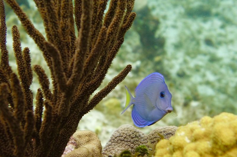 Close-up of fish swimming in coral reef
