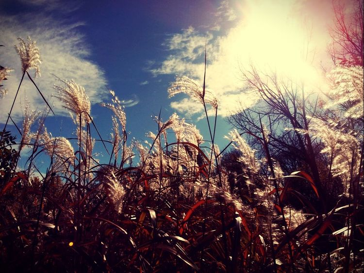 Growth Nature Low Angle View Plant Outdoors Sky Day Beauty In Nature Grass Timothy Grass Close-up Pretty♡ Picturejunkie Check This Out Autumn Tree Area Tranquility Perspectives On Nature