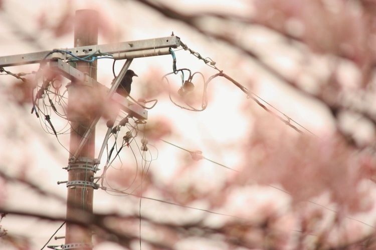 Low angle view of bird perching on electric pole seen through tree
