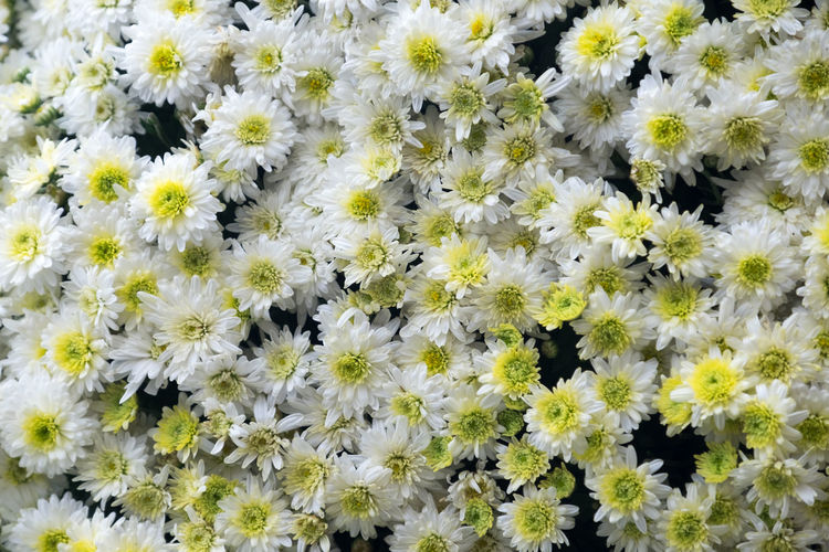 Autumn flowers backgrownd Autumn Background Beauty In Nature Blooming Blossom Close-up Colorfulcolorado Day Flower Flower Head Fragility Freh Freshness Green Growth Herb Nature No People Outdoors Petal Plant Plants And Flowers Spring Summer