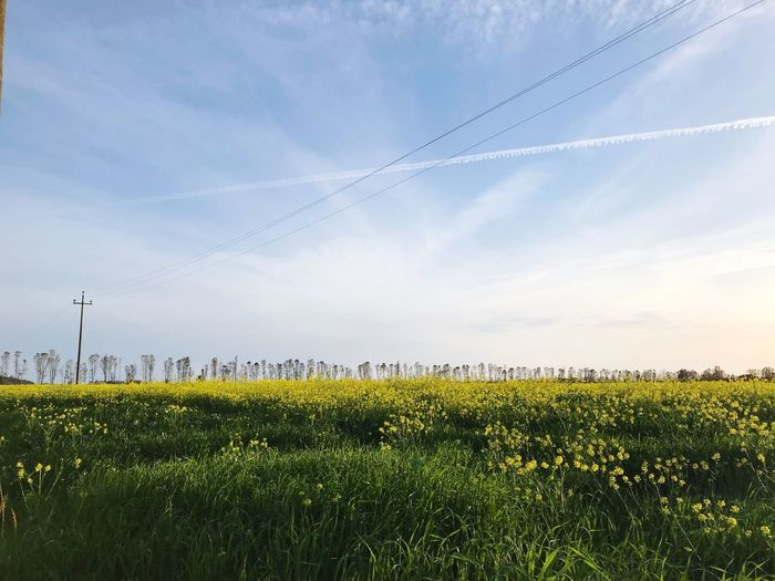 Yellow in the sky Italy Tuscany Grosseto Yellow Flower Plant Sky Beauty In Nature Field Growth Land Cloud - Sky Nature Landscape Flower Tranquility Tranquil Scene No People Flowering Plant Agriculture Green Color Scenics - Nature