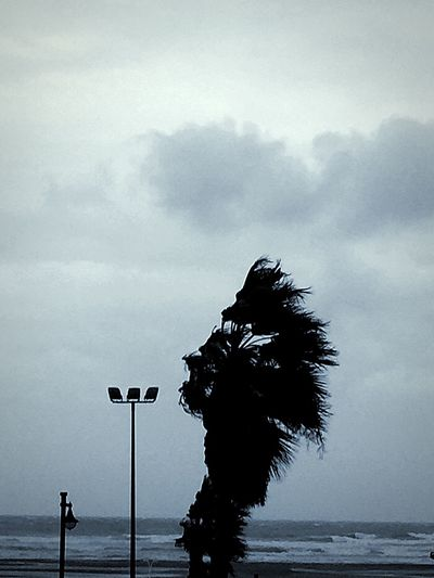 Lonley Tree Hammered by the Wind and the Winter Grey Cloudy Weather in València SPAIN all Near The Sea