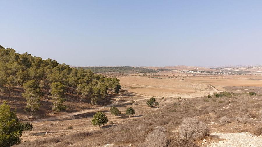Tree Arid