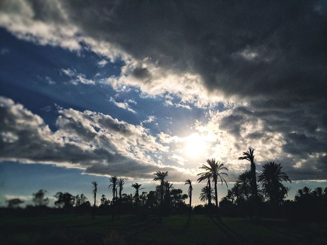 Cloud - Sky Sky Tree Nature Sunbeam Sunlight Scenics Beauty In Nature Sun Sunset Silhouette Tranquility No People Tranquil Scene Outdoors Growth Palm Tree Landscape Day