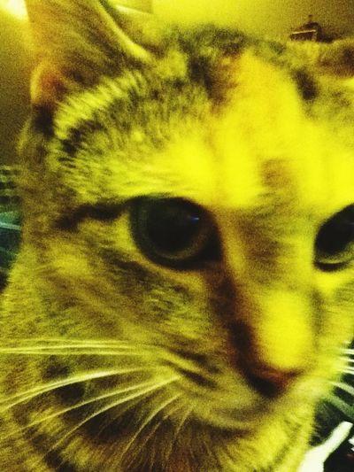 Cute Pets Cat♡