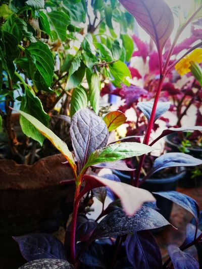 Plants 🌱🌿🍁 Plant Plants Colorful Plants Colorful Nature Nature Nature_collection Nature_collection Nature Photography Naturelovers Nature On Your Doorstep