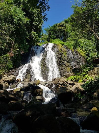 waterfalls Tree