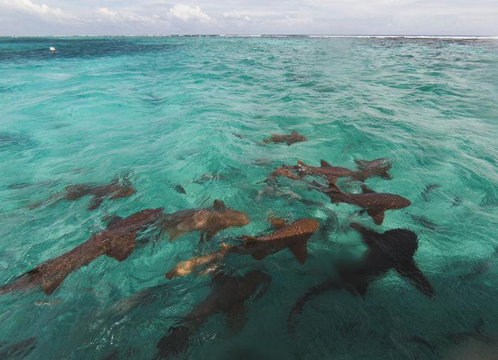 Belize  Beauty In Nature Caribbean Caye Caulker Horizon Over Water Nature Sea Sea Life Shark Sharks Swimming Wildlife