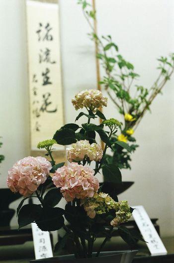 Japan Art IKEBANA 若宮祭 生け花 Nagoya My Country In A Photo Flowers