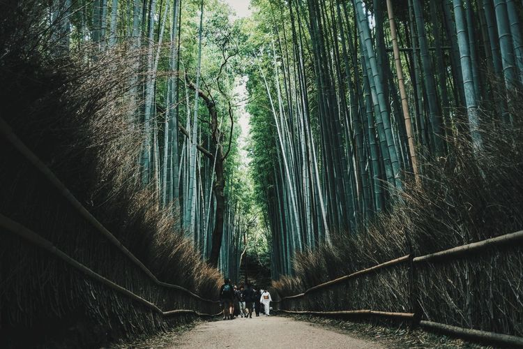 Rear view of people walking in bamboo forest