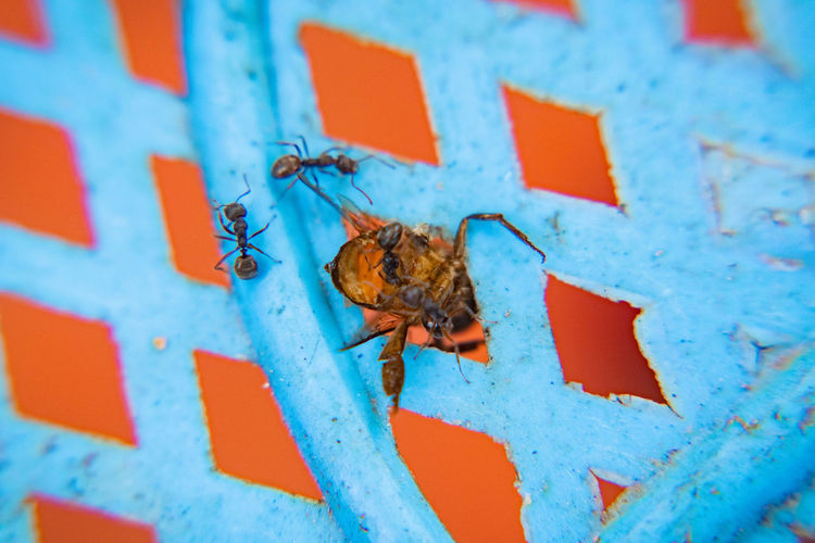 Insects were eaten Invertebrate Animal Themes Animal Animal Wildlife Animals In The Wild Insect Close-up One Animal No People Red Wall - Building Feature Blue Day Outdoors Built Structure Architecture Nature Selective Focus Arthropod Metal