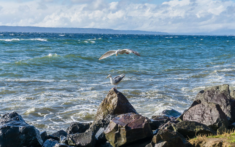 View of bird on rock by sea against sky