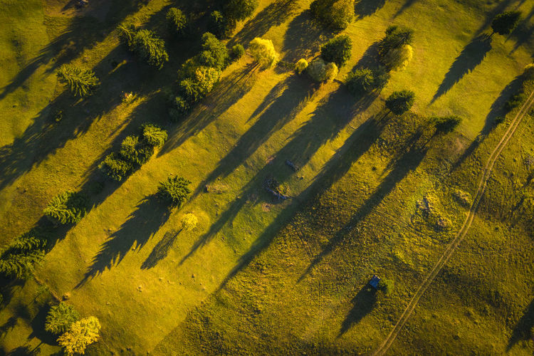 Aerial photography of a landscape with the shadows of the trees in the sunset light. Aerial Shot EyeEmNewHere Aerial Aerial Photography Aerialphotography Beauty In Nature Day Environment Field Focus On Shadow Growth High Angle View Land Landscape Nature Outdoors Plant Rural Scene Scenics - Nature Shadow Sunlight Tranquil Scene Tranquility Tree Yellow