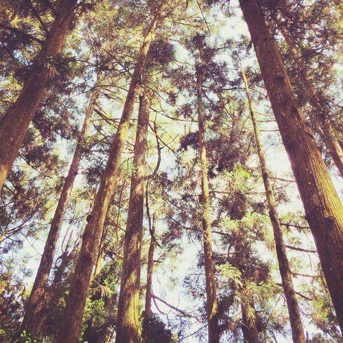 Hugging A Tree Relaxing Enjoying Life Sun Light