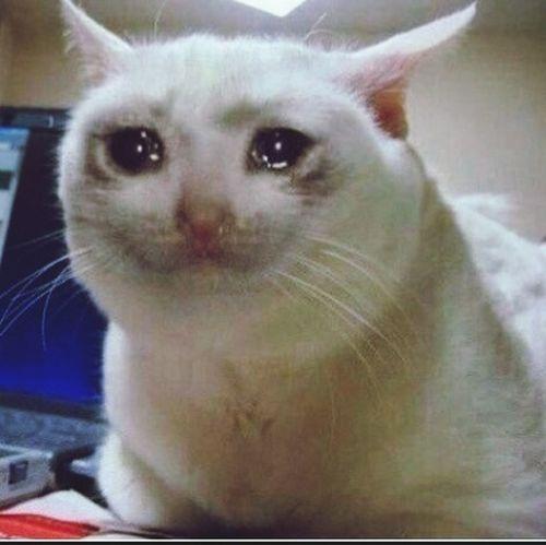 Cat Sadness Sad