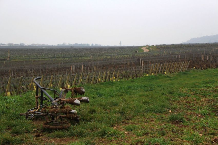Like the first picture I uploaded to EyeEm , this is another View to the Huge Wineyard in Vosne Romanée . The Land belongs to different families, and according to the area, the Grapes are for higher quality Wine , like Premier Cru or Grand Cru . I took this picture trying to capture the Solitude of the field and the seasonal Abandonment of Tools used to produce the Wines we consume. You really have to be patient with grapes and wine. Franche-comté France Landscape Land Work Vino Cosecha Uvas Viñedo Campo