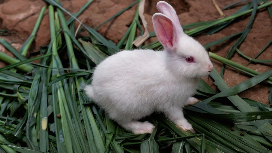 High angle view of white rabbit