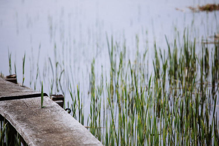 Green Lake Landing Stage Mecklenburg-Vorpommern Natue Nature No People Outdoors Reed Wood