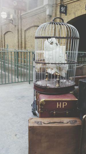 Hedwig Hogwarts Harry Potter Diagon Alley