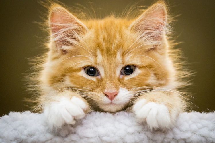 Hello, its me. Animal Eye Animal Hair Animal Head  Animal Themes Cat Close-up Domestic Animals Domestic Cat Feline Front View Hello Kitten Kittens Looking At Camera Mammal One Animal Orange Kitten Peekaboo Pets Portrait Relaxation Resting Whisker Whiskers