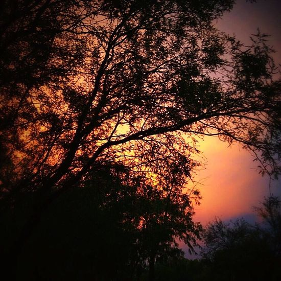 Arizona Way Out West Dusk Nature Natural Beauty Sunset Pink Hue Violet Hue Travels Stranded Exploring Trees