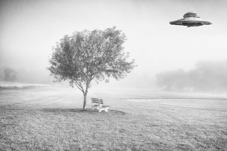 Ufo Flying Over Tree On Grassy Field During Foggy Weather