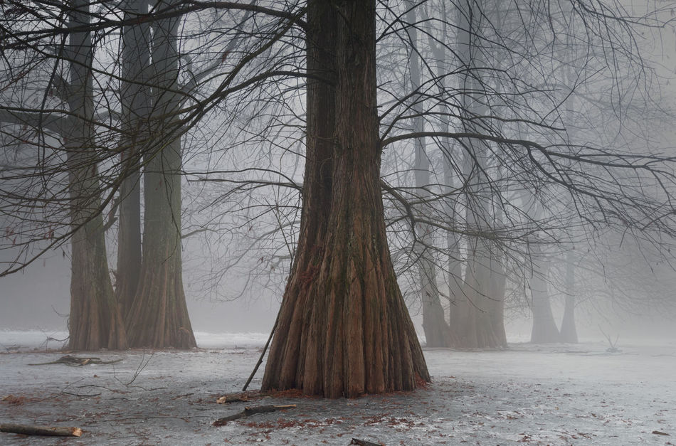 Trees Beauty In Nature Cold Temperature Foggy Foggy Landscape Foggy Morning Forest Forest Photography Frozen Frozen Lake Landscape Landscape_Collection Landscape_photography Nature Nature Nature Photography Nature_collection Naturelovers Naturephotography No People Tree Tree Tree Trunk Tree_collection  Trees Winter