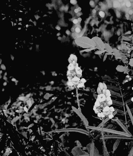 Flowers For Passion! Flower Head ถ่ายเรื่อยเปื่อย ถ่ายเล่นๆ ถ่ายมั่วๆ Black & White Black And White Blackandwhite ขาวดำ ขาวและดำ Close-up