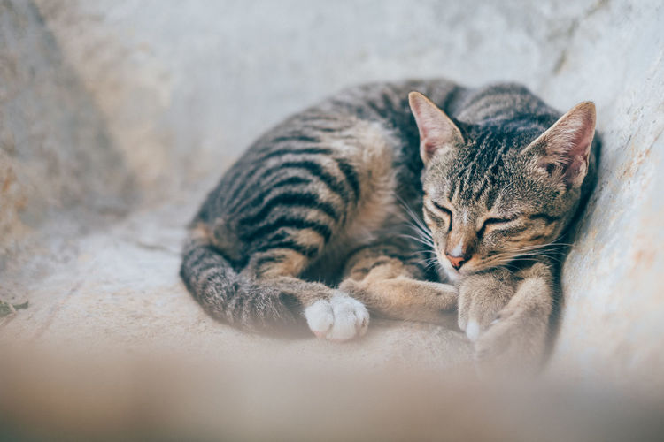 Sleeping Cat Animal Themes Cat Close-up Day Domestic Animals Domestic Cat Feline Indoors  Kitten Mammal No People One Animal Pets Relaxation Selective Focus Tabby Cat Whisker