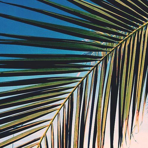Palms Boulevard Relaxing Walking