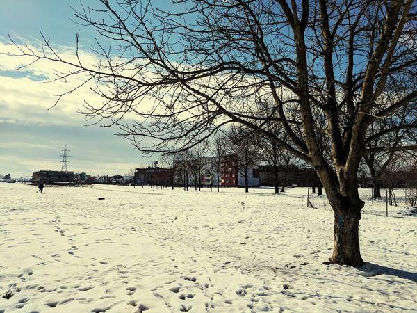 A walk through the snow Tree Sky