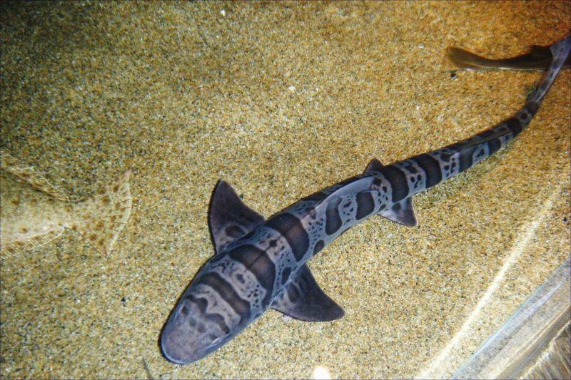 Taking Photos Monterey Bay Aquarium California