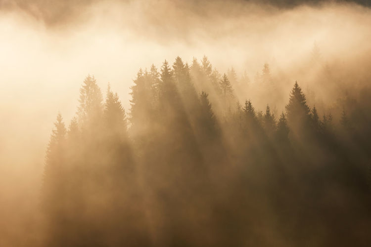 Scenic View Of Silhouette Trees During Foggy Weather At Sunrise