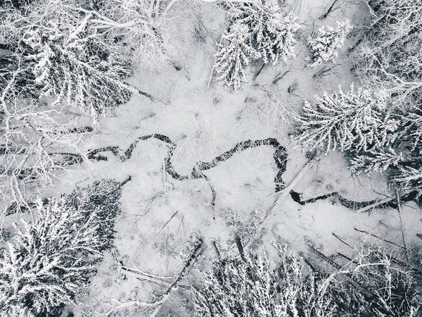 River in the snowy forest Drone  Kaunas County Nature Winter Wintertime Aerial Aerial View Backgrounds Beauty In Nature Cold Temperature Day Dji Drone Europe Field Frozen Grass High Angle View Landscape Mavic Pro Nature No People Outdoors Pine Tree River Snow Snowy Forest Top Down View Tranquility Winter Shades Of Winter