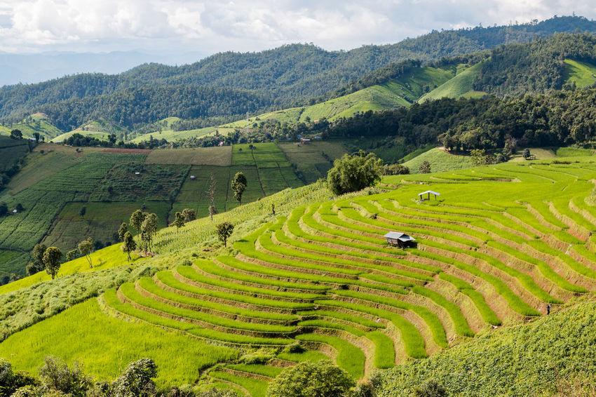 9488a4a38 Agriculture ASIA Asian Ban Chiangmai Cloud Environment Farm Farmer Field  Green Grow Growth Hill Land Landmark
