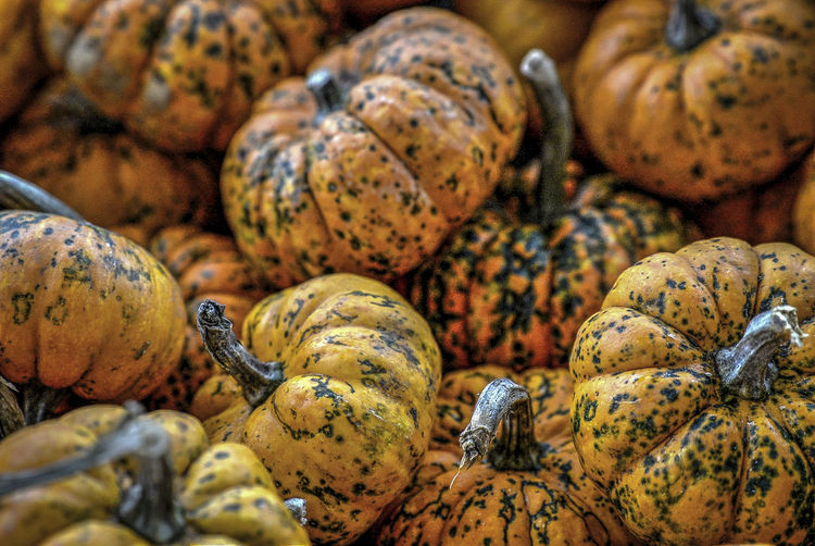 Abundance Backgrounds Beauty In Nature Close-up Day Detail Focus On Foreground Full Frame Group Of People Natural Pattern Nature No People Outdoors Pumpkin Selective Focus Shell